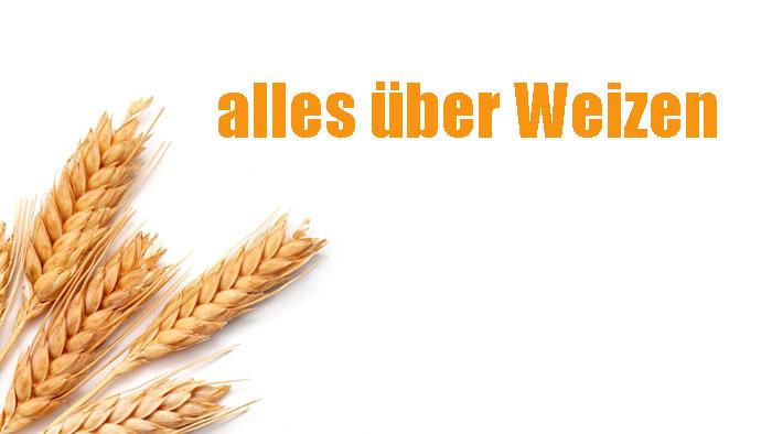 alles über Weizen Ernährungseffekt und Nebenwirkungen