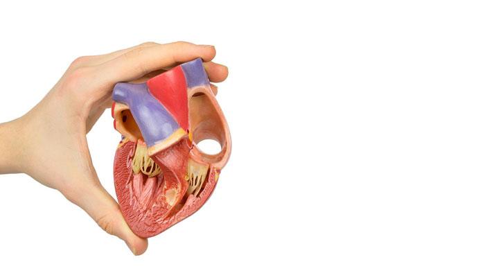 koronare Herzkrankheit Ursachen, Symptome und Behandlungen