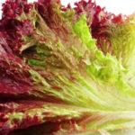 9 Gesundheit und Ernährungsvorteile von Rotem Blattsalat