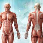 Autonome Dysfunktion: Symptome, Typen und Behandlungen