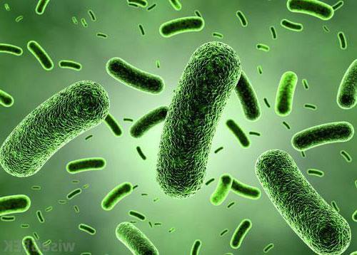Bacillus Coagulans Vorteile, Anwendungen und Definitionen