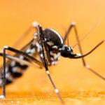 Die Gefahren der Moskitos: Krankheiten