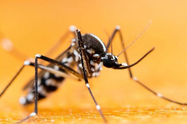 Die Gefahren der Moskitos Krankheiten