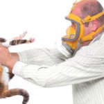 Katzenallergien: Symptome und Behandlung