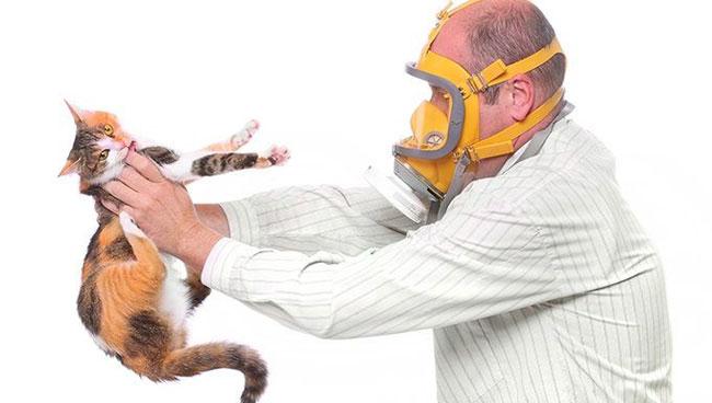 Katzenallergien Symptome und Behandlung