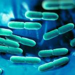 Lactobacillus rhamnosus: Vorteile, Nebenwirkungen und Dosierung