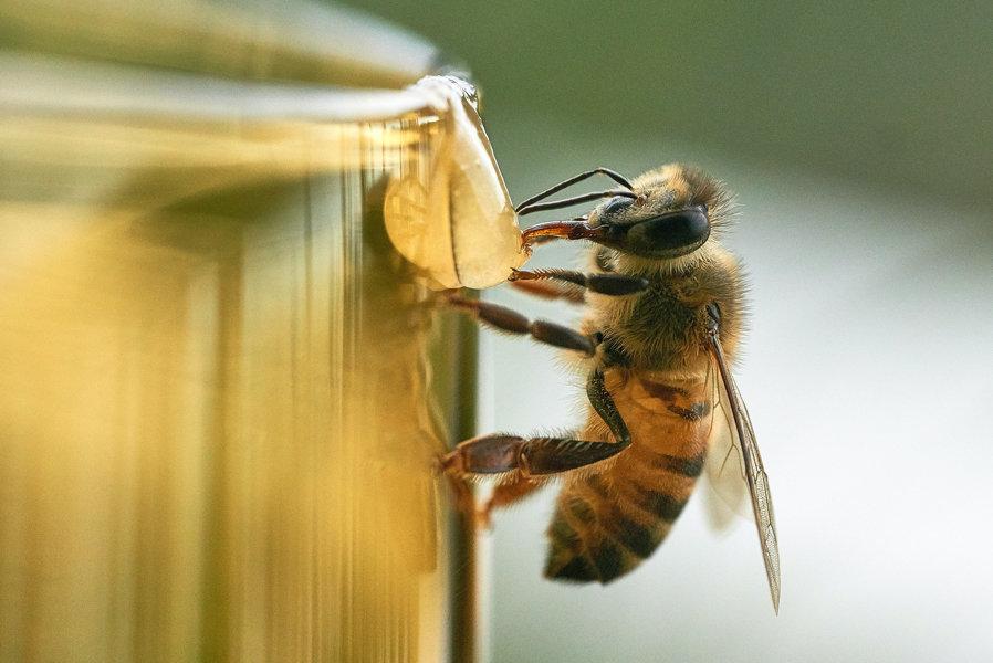 Amerikanischer Honig ist radioaktiv
