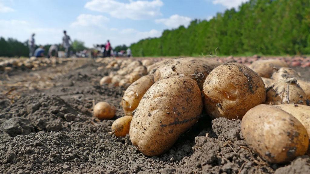 Um Ihren Tagesbedarf an Vitamin b6 zu decken, müssten Sie etwa 1,5 Pfund Kartoffeln essen.